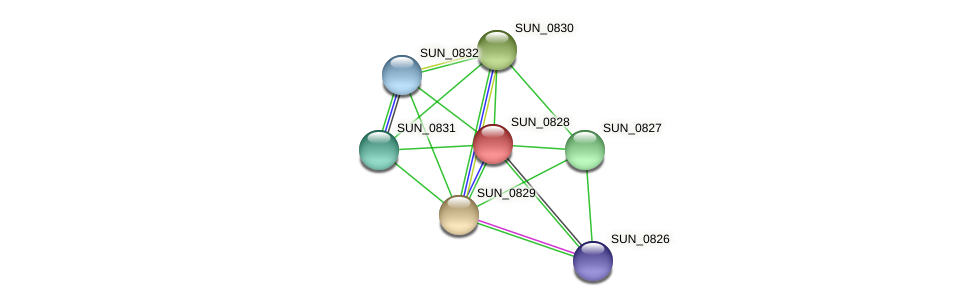 SUN_0828 protein (Sulfurovum sp. NBC371) - STRING interaction network