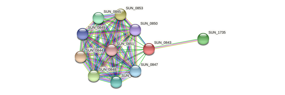 SUN_0843 protein (Sulfurovum sp. NBC371) - STRING interaction network