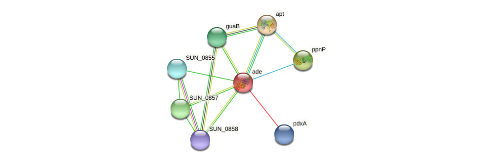 ade protein (Sulfurovum sp. NBC371) - STRING interaction network
