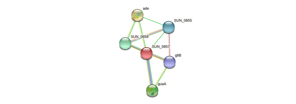SUN_0857 protein (Sulfurovum sp. NBC371) - STRING interaction network