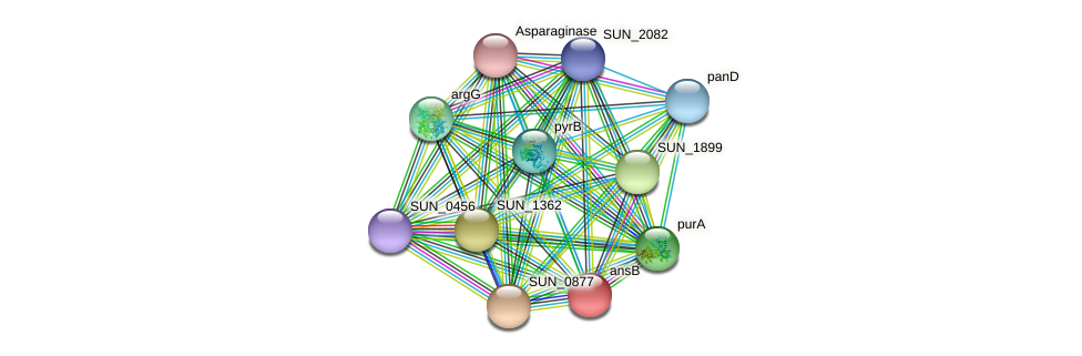ansB protein (Sulfurovum sp. NBC371) - STRING interaction network
