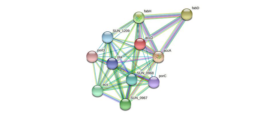 accD protein (Sulfurovum sp. NBC371) - STRING interaction network