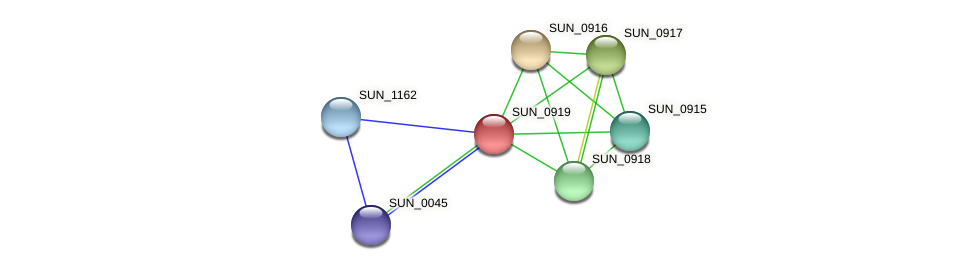 SUN_0919 protein (Sulfurovum sp. NBC371) - STRING interaction network