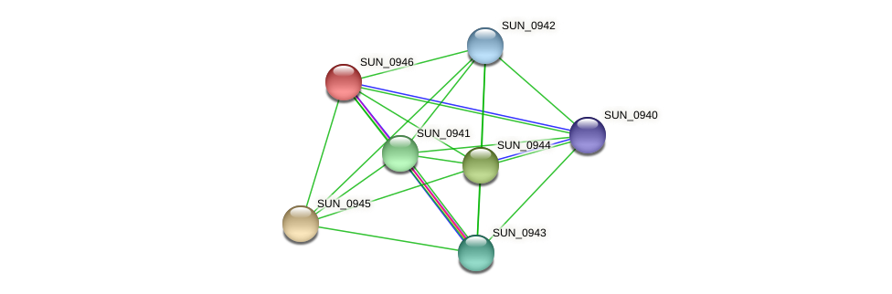 SUN_0946 protein (Sulfurovum sp. NBC371) - STRING interaction network