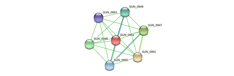 SUN_0952 protein (Sulfurovum sp. NBC371) - STRING interaction network