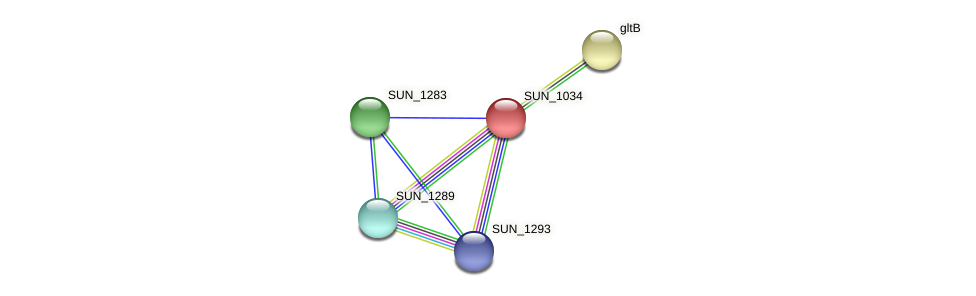 SUN_1034 protein (Sulfurovum sp. NBC371) - STRING interaction network