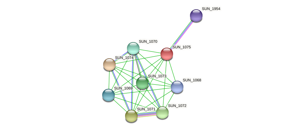 SUN_1075 protein (Sulfurovum sp. NBC371) - STRING interaction network