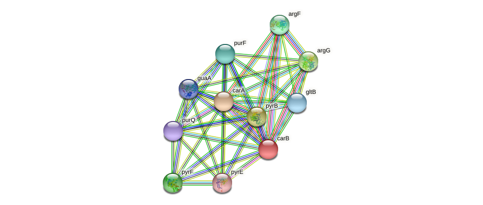 carB protein (Sulfurovum sp. NBC371) - STRING interaction network