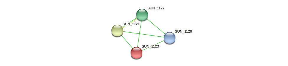 SUN_1123 protein (Sulfurovum sp. NBC371) - STRING interaction network