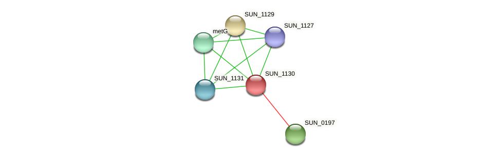 SUN_1130 protein (Sulfurovum sp. NBC371) - STRING interaction network