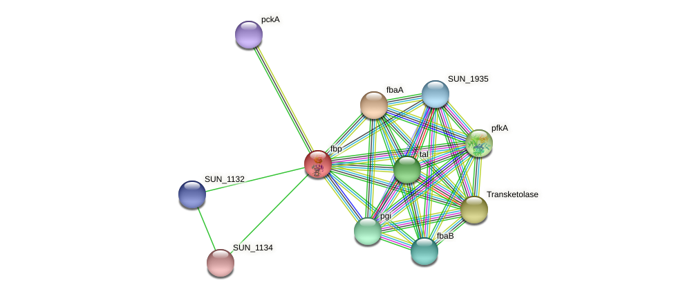 fbp protein (Sulfurovum sp. NBC371) - STRING interaction network