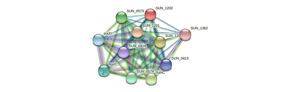 SUN_1202 protein (Sulfurovum sp. NBC371) - STRING interaction network