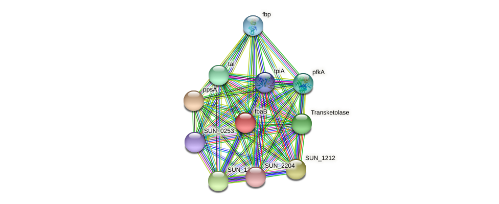 fbaB protein (Sulfurovum sp. NBC371) - STRING interaction network