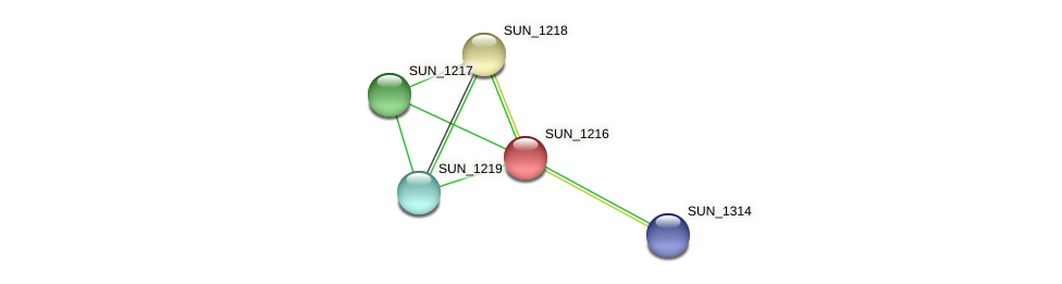 SUN_1216 protein (Sulfurovum sp. NBC371) - STRING interaction network