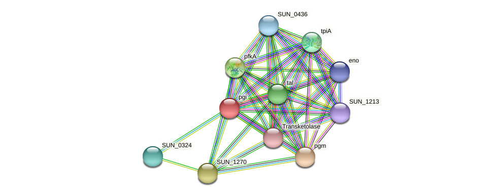 SUN_1276 protein (Sulfurovum sp. NBC371) - STRING interaction network