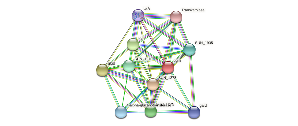 pgm protein (Sulfurovum sp. NBC371) - STRING interaction network