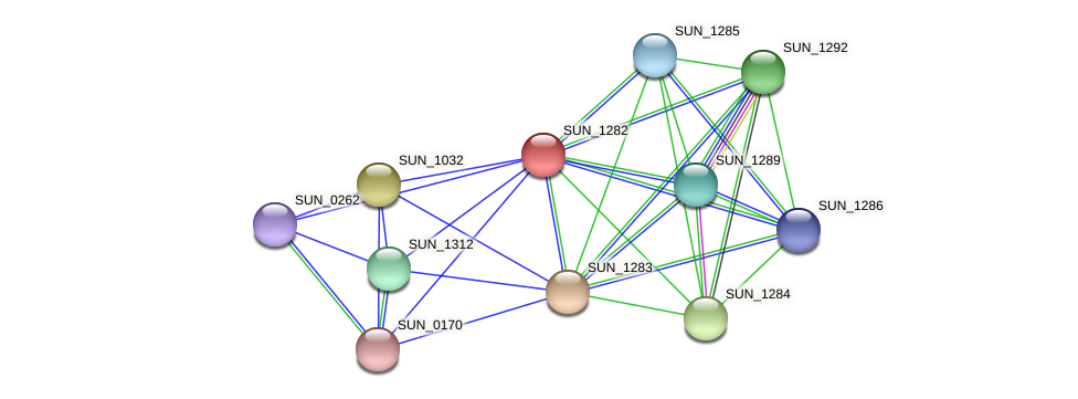 SUN_1282 protein (Sulfurovum sp. NBC371) - STRING interaction network