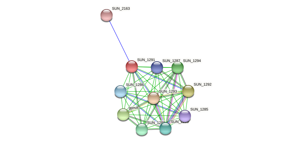 SUN_1291 protein (Sulfurovum sp. NBC371) - STRING interaction network