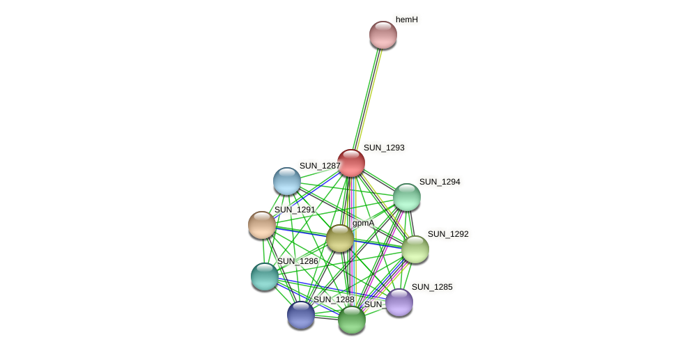 SUN_1293 protein (Sulfurovum sp. NBC371) - STRING interaction network