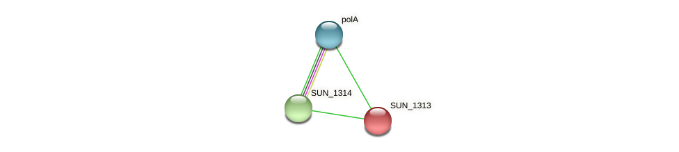 SUN_1313 protein (Sulfurovum sp. NBC371) - STRING interaction network