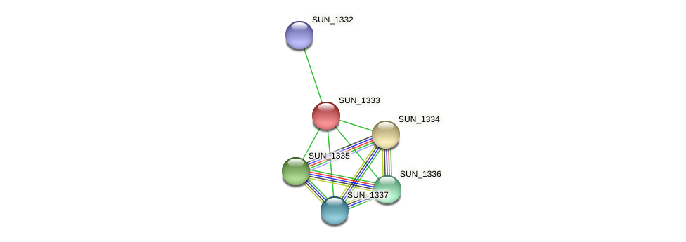 SUN_1333 protein (Sulfurovum sp. NBC371) - STRING interaction network