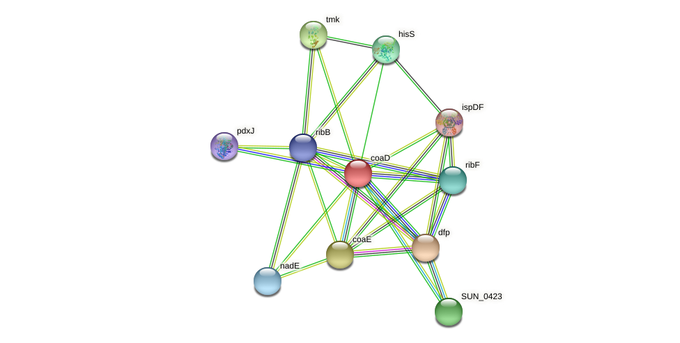 coaD protein (Sulfurovum sp. NBC371) - STRING interaction network