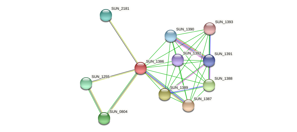 SUN_1386 protein (Sulfurovum sp. NBC371) - STRING interaction network