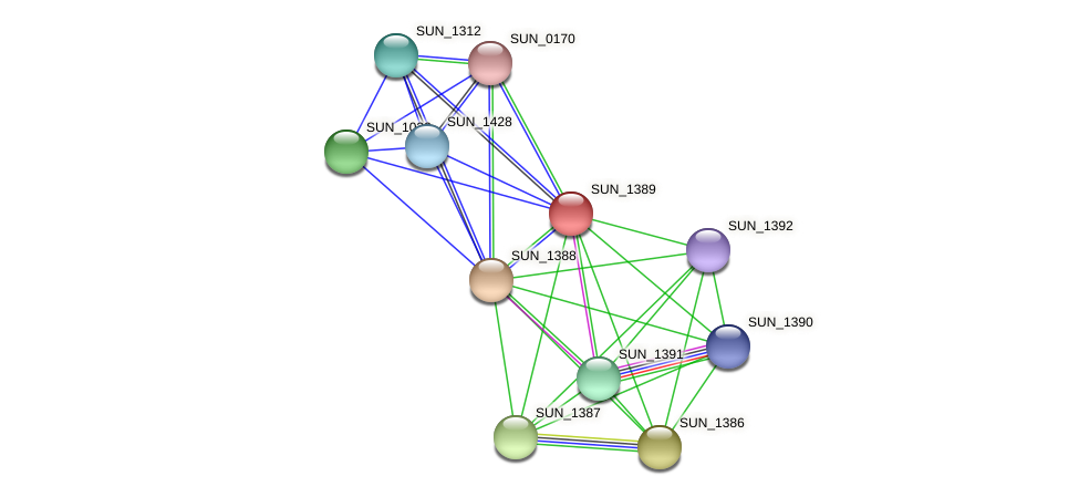 SUN_1389 protein (Sulfurovum sp. NBC371) - STRING interaction network