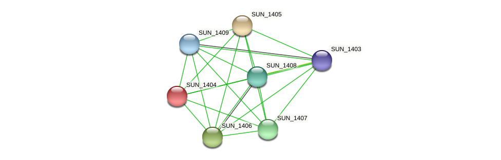 SUN_1404 protein (Sulfurovum sp. NBC371) - STRING interaction network