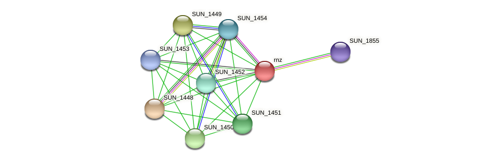 rnz protein (Sulfurovum sp. NBC371) - STRING interaction network