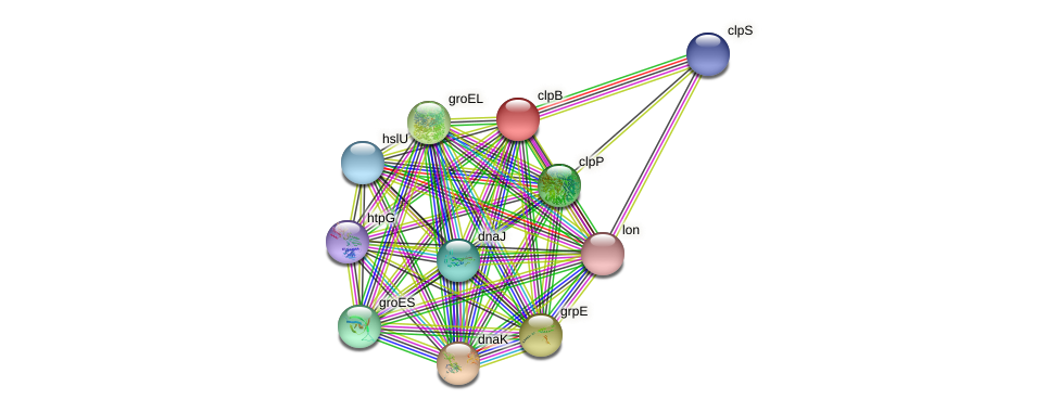 clpB protein (Sulfurovum sp. NBC371) - STRING interaction network