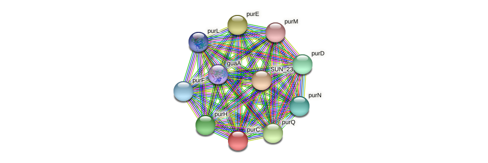 purC protein (Sulfurovum sp. NBC371) - STRING interaction network