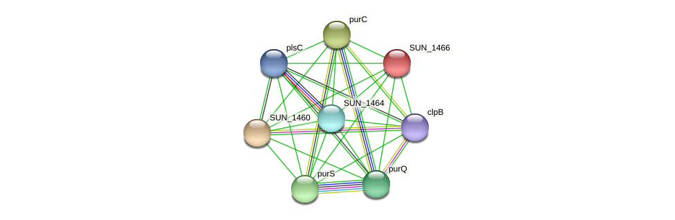 SUN_1466 protein (Sulfurovum sp. NBC371) - STRING interaction network
