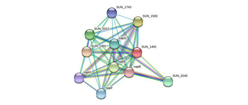 SUN_1491 protein (Sulfurovum sp. NBC371) - STRING interaction network