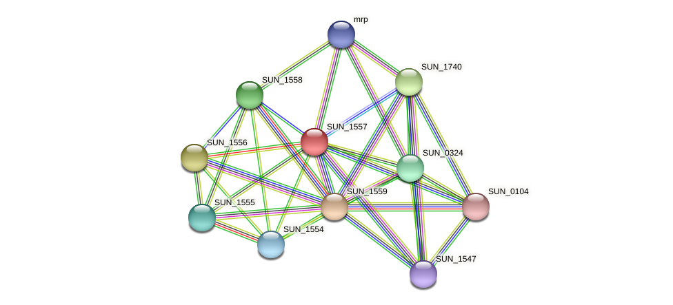 SUN_1557 protein (Sulfurovum sp. NBC371) - STRING interaction network