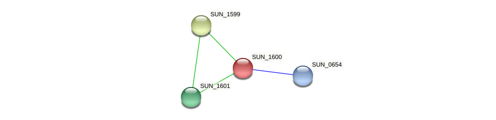 SUN_1600 protein (Sulfurovum sp. NBC371) - STRING interaction network