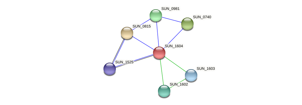 SUN_1604 protein (Sulfurovum sp. NBC371) - STRING interaction network