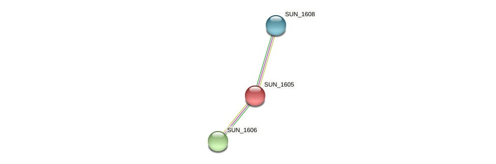 SUN_1605 protein (Sulfurovum sp. NBC371) - STRING interaction network
