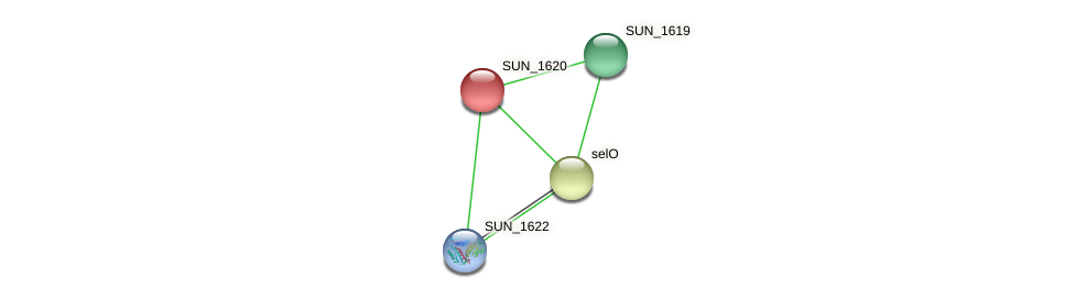 SUN_1620 protein (Sulfurovum sp. NBC371) - STRING interaction network