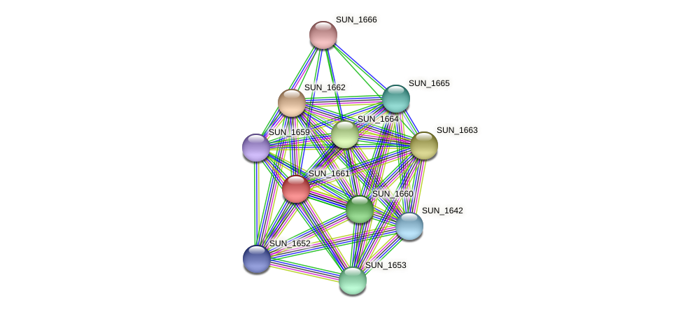 SUN_1661 protein (Sulfurovum sp. NBC371) - STRING interaction network