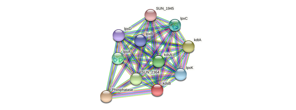 kdsB protein (Sulfurovum sp. NBC371) - STRING interaction network