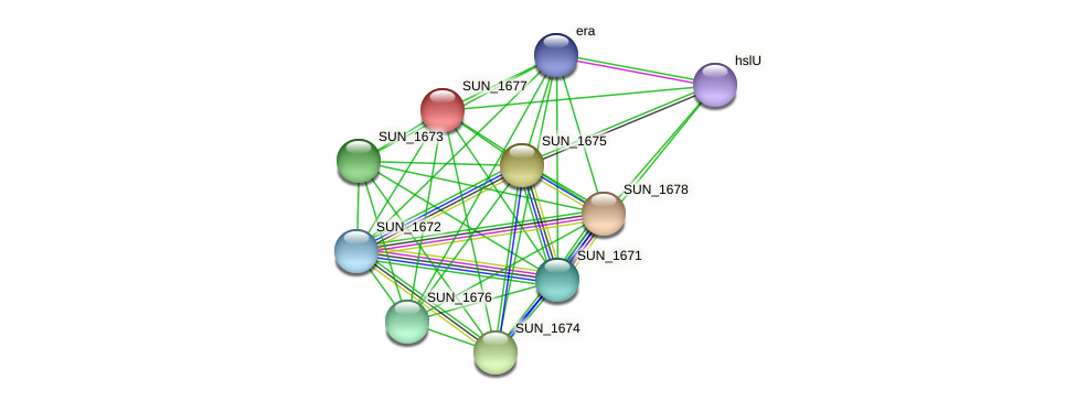 SUN_1677 protein (Sulfurovum sp. NBC371) - STRING interaction network