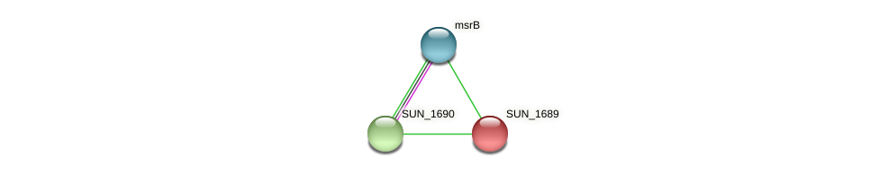 SUN_1689 protein (Sulfurovum sp. NBC371) - STRING interaction network