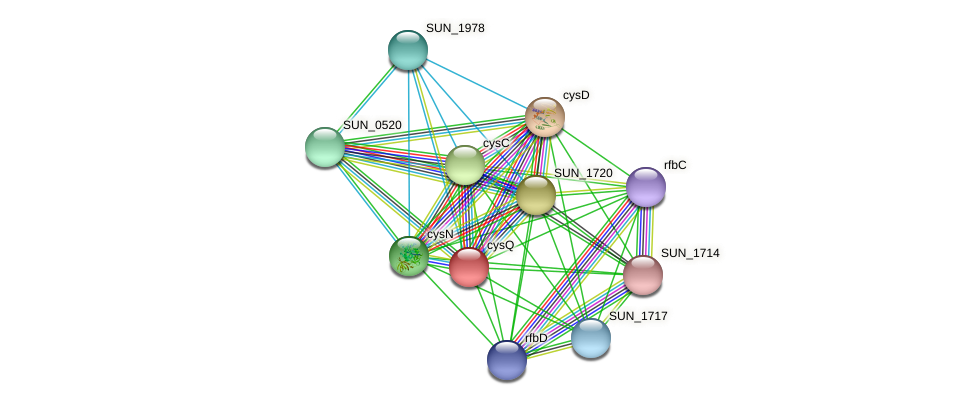 cysQ protein (Sulfurovum sp. NBC371) - STRING interaction network