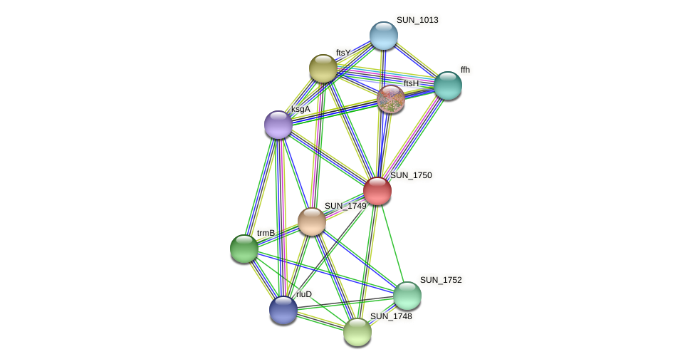 SUN_1750 protein (Sulfurovum sp. NBC371) - STRING interaction network