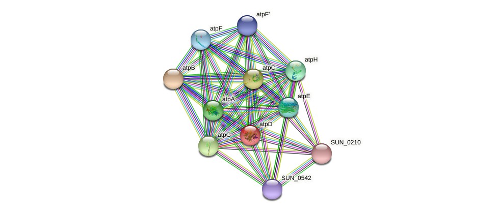 atpD protein (Sulfurovum sp. NBC371) - STRING interaction network