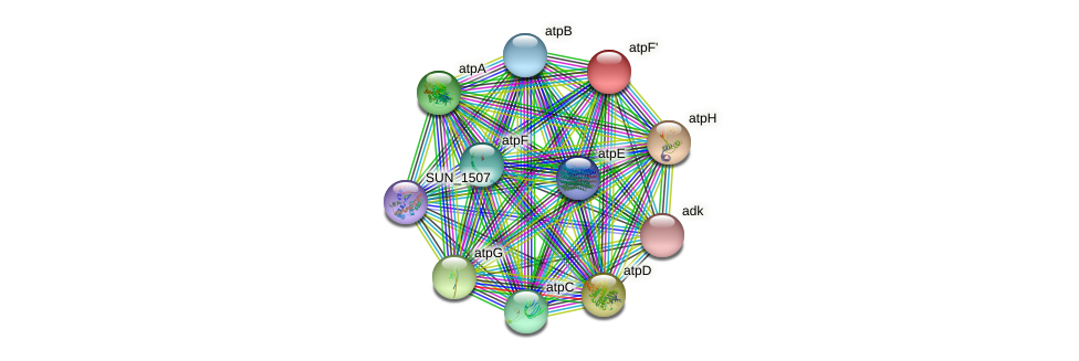 SUN_1776 protein (Sulfurovum sp. NBC371) - STRING interaction network