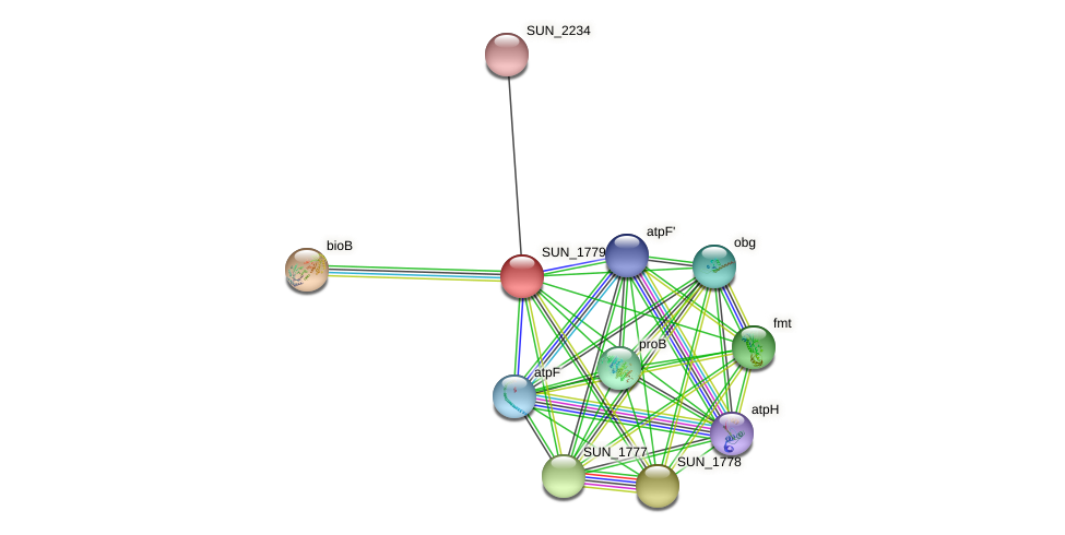 SUN_1779 protein (Sulfurovum sp. NBC371) - STRING interaction network