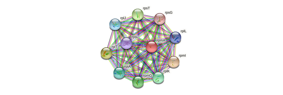 rpmA protein (Sulfurovum sp. NBC371) - STRING interaction network