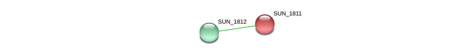 SUN_1811 protein (Sulfurovum sp. NBC371) - STRING interaction network